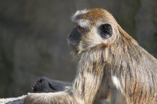 ... a monkey