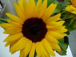 """""""difficile de trouver du soleil sur le pays aujourd'hui'. Prenons nos précautions et un soleil d'avance. Bonne journée !"""